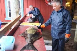 giorno_7_pescatori